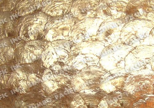 Natural Gold Half Moon Scallop