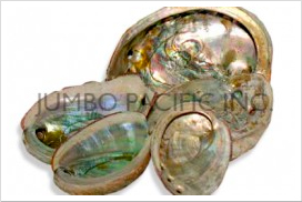 abalone-shells