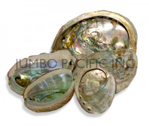 Abalone Shell Tile